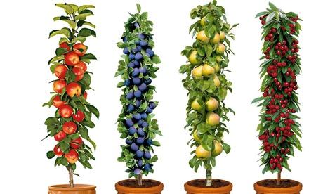Set de 4 o 8 árboles frutales manzano, ciruelo, peral y cerezo