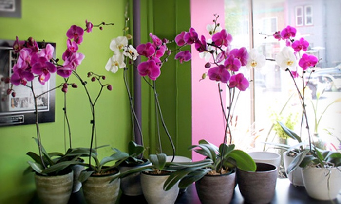 Lee's Flower & Card Shop - Washington DC: $15 for $30 Worth of Flowers, Plants, and Merchandise at Lee's Flower & Card Shop