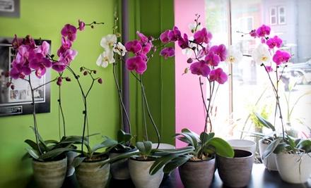 $30 Groupon to Lee's Flower & Card Shop - Lee's Flower & Card Shop in Washington
