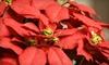 Ridge Greenhouse and Florist - Oak Ridge: $15 for $30 Worth of Freshly Cut Flower Arrangements and Poinsettias at Ridge Greenhouse and Florist in Oak Ridge