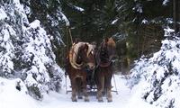 Winterlich-Romantische Pferdekutschen-Fahrt für 2 bis 6 Personen von der Jausenstation Foisching (bis zu 52% sparen*)