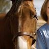 $15 Off Guided Horseback Tour