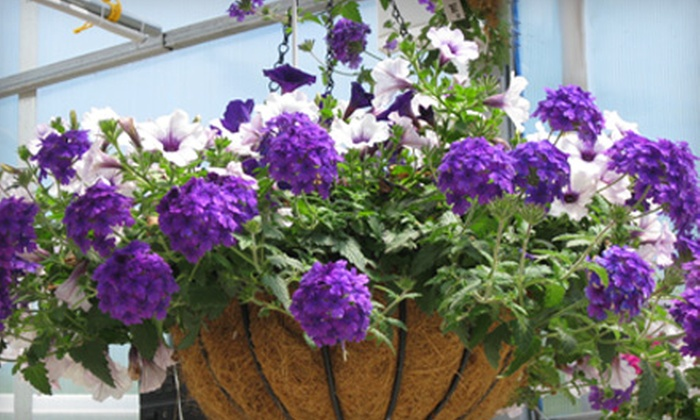 52 Off Flowers Plants And Shrubs In Carmel