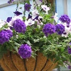 52% Off Flowers, Plants, and Shrubs in Carmel