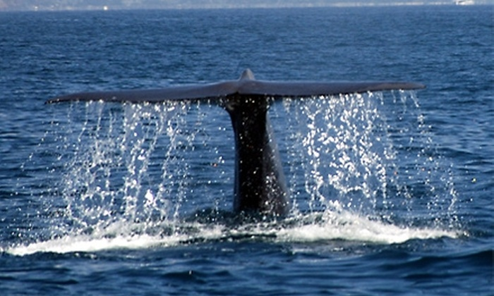 Dana Wharf Sportfishing & Whale Watching - Dana Point: $14 for One Ticket to a Blue Whale Watching Cruise from Dana Wharf Sportfishing & Whale Watching in Dana Point (Up to $32 Value)