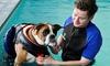 Dog Swim with Hydrotherapist