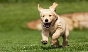 Southern Paws Pet Resort: Up to 51% Off Doggy Daycare at Southern Paws Pet Resort