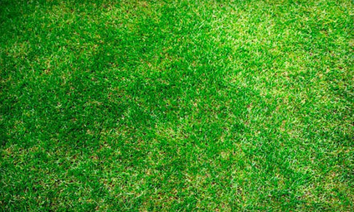 Hinshaw Turf & Tree - Asheville: $89 for Aeration and Organic Fertilization for Up to 6,000 Square Feet of a Yard from Hinshaw Turf & Tree ($300 Value)