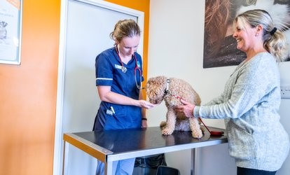 image for Pet Health Check-Up at The Vet, Six Locations (42% Off)