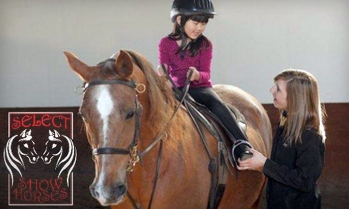 Select Show Horses - Washington: $40 for Two One-Hour Horseback Riding Lessons at Select Show Horses in Sheridan ($80 Value)