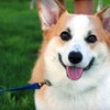 Up to 59% Off Pet Care