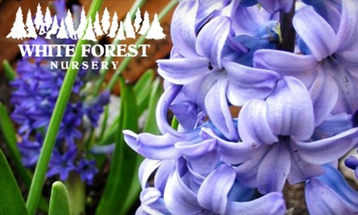 White Forest Nursery - Bakersfield: $10 for $20 Worth of Plants, Flowers, Trees, and Gifts at White Forest Nursery