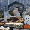 Up to 60% Off Farm-Festival Admissions in Acushnet