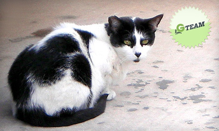 Community Cat Coalition of Clark County - Las Vegas: If 30 People Donate $10, Then Community Cat Coalition of Clark County Can Spay or Neuter 20 Feral Cats