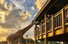 Up to 35% Off Safari Wildlife Park Experience at Wild Florida
