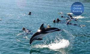 E-KO Tours: Cruise & Swimming with Dolphins Experience for 1 ($125), 2 ($249) or 4 People ($495) with E-KO Tours (Up to $660 Value)