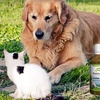 62% Off Natural Health Remedies for Pets
