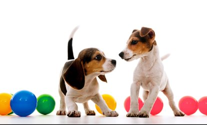 image for $52 for Five Days of Doggie Daycare at Underdog Kennels ($120 Value)