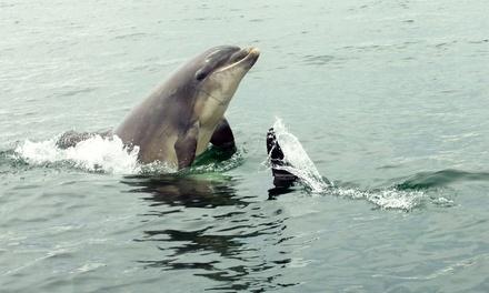 St.Andrews & Elie Sea Safari