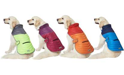 Xoxo Dresses for Dogs