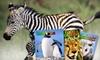 """Zoobooks,"" ""Zoobies,"" or ""Zootles"" Magazine: Wildlife Education"