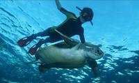 Actividades acuáticas con guía para 1, 2 o 4 personas desde 19,90 € con Ocean Friends Diving