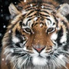 Heritage Park Zoological Sanctuary – Up to 50%  Off