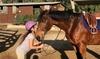 Up to 67% Off Horseback Riding Lessons at Vogel Equine