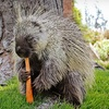 Wildlife Learning Center – Up to $10 Off Visit