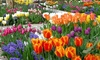 Pre-Order: 45 Days Of Spring Flower Mix (45, 90, or 180 Mixed Bulbs): Pre-Order: 45 Days Of Spring Flower Collection (45, 90, or 180 Mixed Bulbs with Bulb Planter)