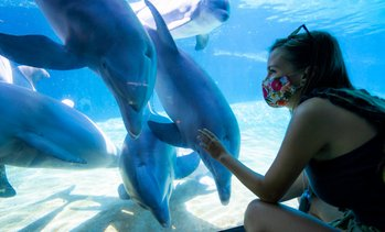 Up to 36% Off Admission to SeaWorld Orlando
