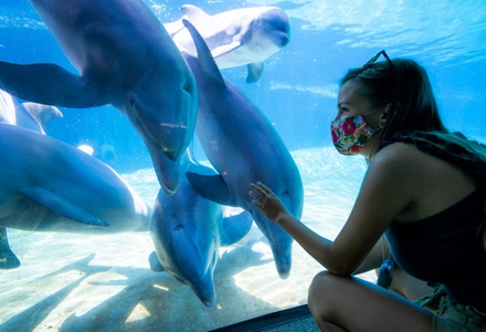 SeaWorld Orlando Admission for One with Dining Option, or 2, 3 or Unlimited SeaWorld Park Visits (Up to 43% Off)