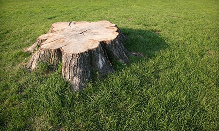 Palmetto Tree Service - Charleston: Removal of One or Two Tree Stumps from Palmetto Tree Service (Up to 54% Off)