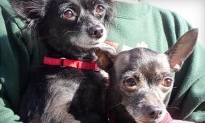 Save-A-Pet Adoption Center: Donate $7 to Help Care for Animals at the Save-A-Pet Adoption Center
