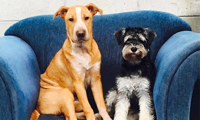 Dog Daycare - Half a Day ($18), One Full Day ($25) or Ten Full Days ($250) at Furry Babies Daycare (Up to $275 Value)