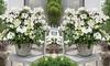 Hydrangea Hybrid Runaway Bride