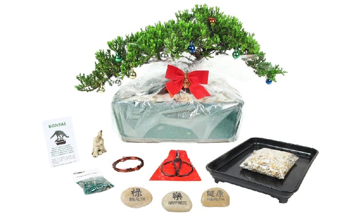 Eve's Garden Gift - Land O Lakes: Holiday Bonsai Tree at Eve's Garden Gifts (Up to 63% Off). Two Options Available.