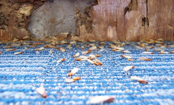 49% Off a Pest-Control Treatment and Termite Inspection