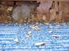 34% Off a Subterranean Termite Treatment