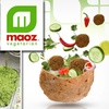 Half Off at Maoz Vegetarian