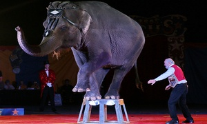 Loomis Bros. Circus: Loomis Bros. Circus through July 14 (Up to 69% Off)