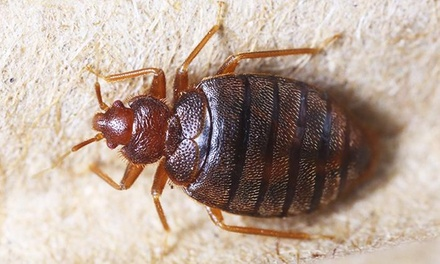 45% Off Pest Control Service - Bed Bug