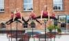 Jumping Fitness - Wiele lokalizacji: Fitness na trampolinie: 4 wejścia na Jumping Frog za 49,99 zł i więcej opcji w Jumping Fitness – 2 lokalizacje