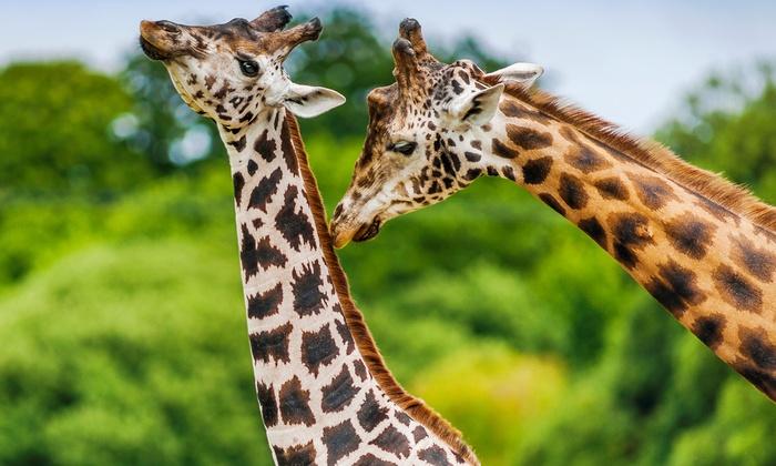 Hotel Fasano Vicino Zoo Safari