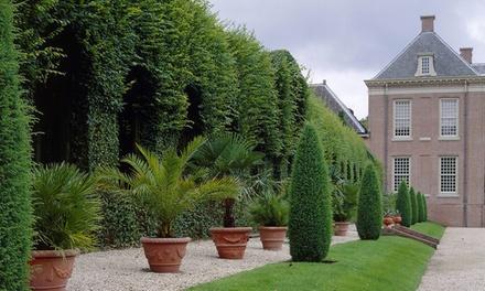 Set van 3 soorten palmbomen voor in de tuin of patio