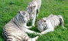 Up to 25% Off Admission to Chestatee Wildlife Preserve& Zoo
