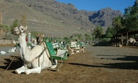 2 entradas a Camel Safari Park con paseo en camello de 30 minutos o 1 hora desde 19,95 € en Camel Safari Park La Baranda