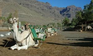 Camel Safari Park La Baranda: 2 entradas a Camel Safari Park con paseo en camello de 30 minutos o 1 hora desde 19,95 € en Camel Safari Park La Baranda