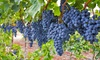 Grow Your Own Grape Vines Bare Root Plant