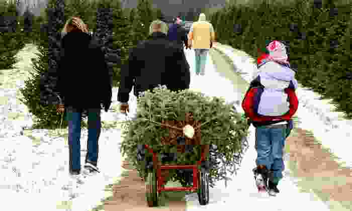Fresh-Cut Christmas Trees Delivered to Your Door: Fresh-Cut Christmas Trees Delivered to Your Door. Multiple Heights Available from $55–$105.